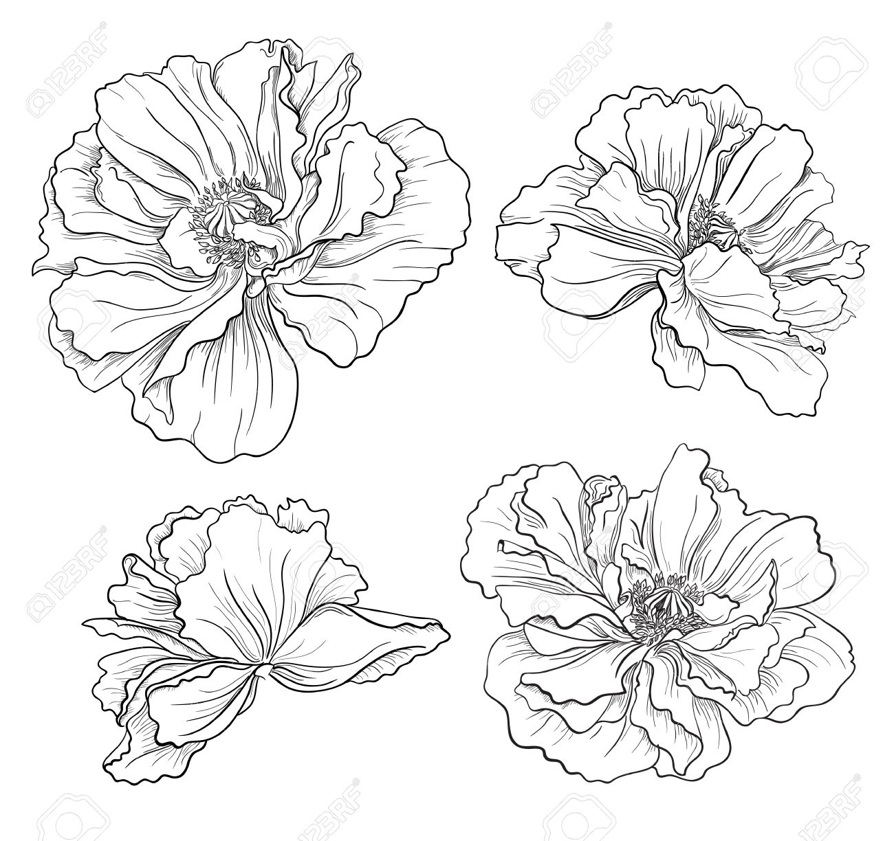 Drawn poppy hand drawn Poppies And Vectors 23350279 Vectors