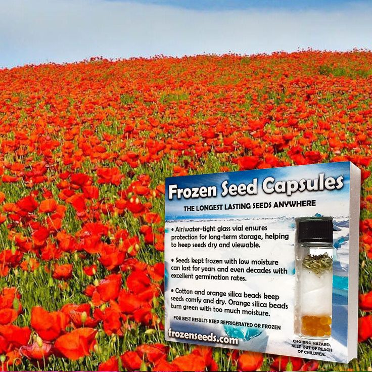 Drawn poppy help for hero Flanders ideas FREE 6 Seed