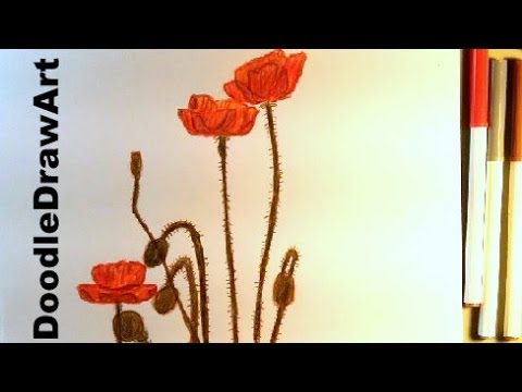 Drawn poppy help for hero How Poppy ▶ To
