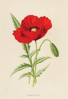Drawn poppy help for hero Red tattoo this my foot
