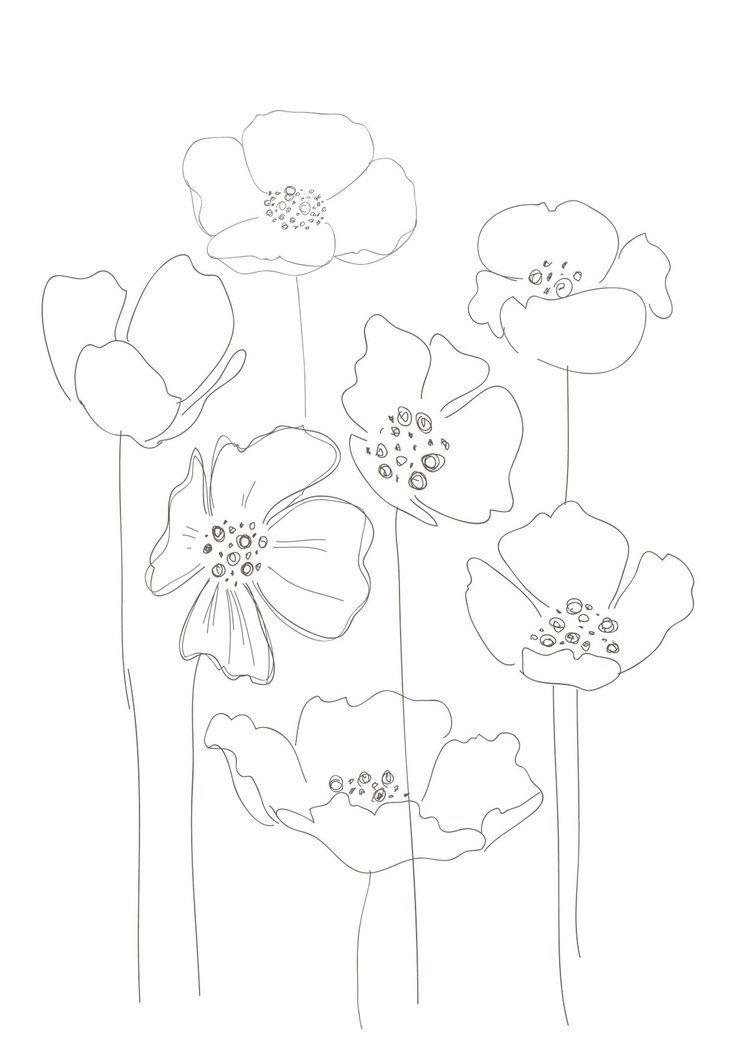 Drawn poppy line drawing Best Pinterest The poppies ideas