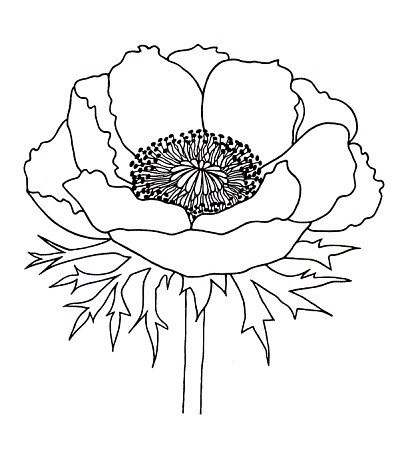 Drawn poppy line drawing Simple drawings simple line more