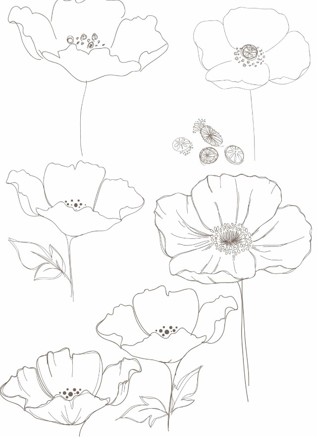 Drawn poppy line drawing Draw Pinterest how to &