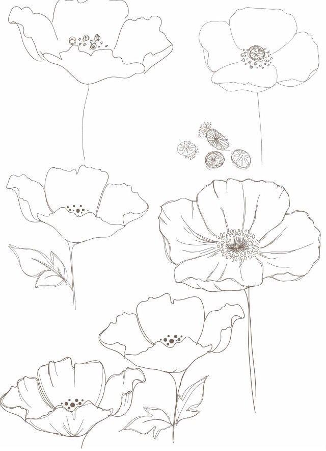 Drawn poppy one Poppy ideas Pinterest on Best