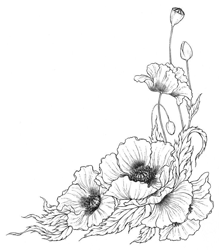 Drawn poppy one On Pinterest Find more Pin