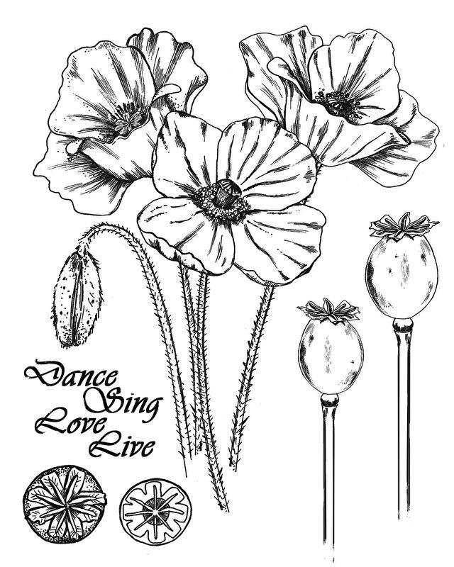 Drawn poppy one At ideas Poppy✖️More One Pinterest