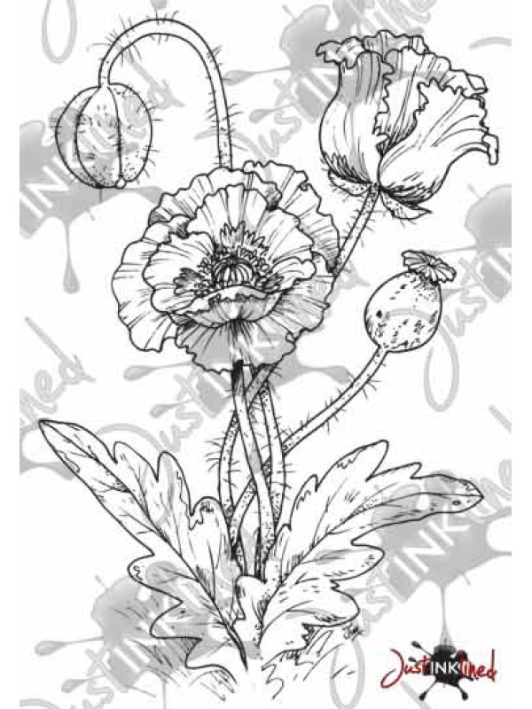 Drawn poppy oriental poppy Stamp Oriental Digital Poppy Stamp