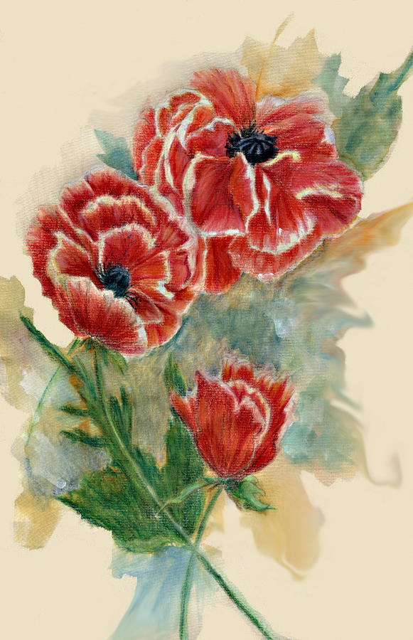 Drawn poppy oriental poppy Trotter Drawing Oriental Floral by