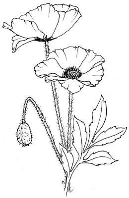 Drawn poppy outline Template projects Lot's 25+ for