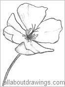 Drawn poppy outline California Outline Flower Outline Poppy