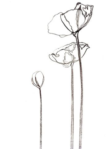Drawn poppy outline Flower Flower Pinterest E(art)h flower
