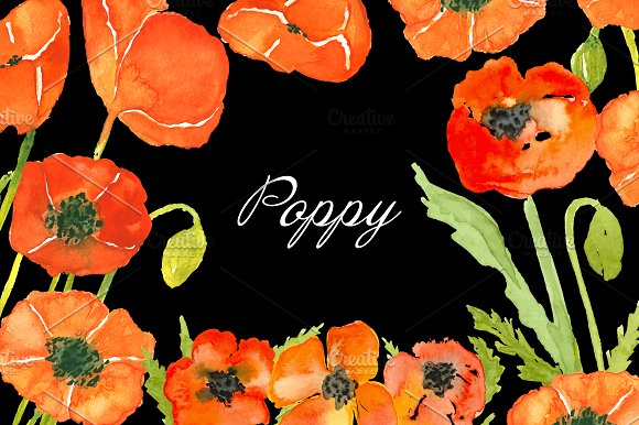 Drawn poppy painted On drawn painted ~ Illustrations