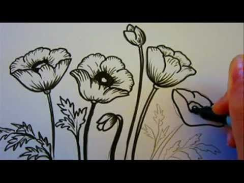 Drawn poppy painted Poppies Poppy YouTube best Watercolor