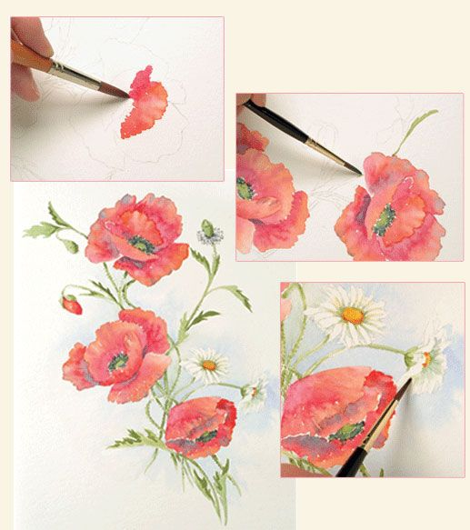 Drawn poppy painted Painting 31 & Flowers To