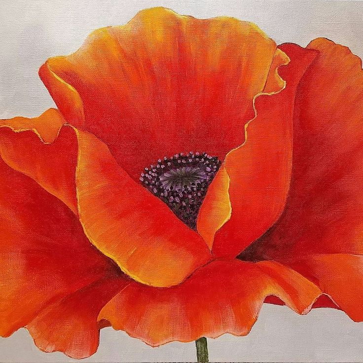 Drawn poppy painted Drawing this #angelafineart 25+ Poppy