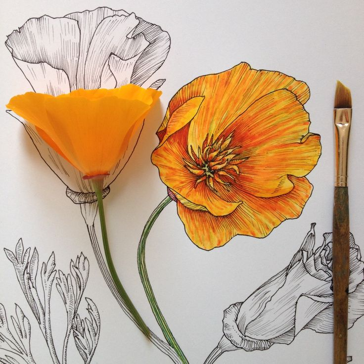 Drawn poppy painted Pinterest ideas on Best Poppy