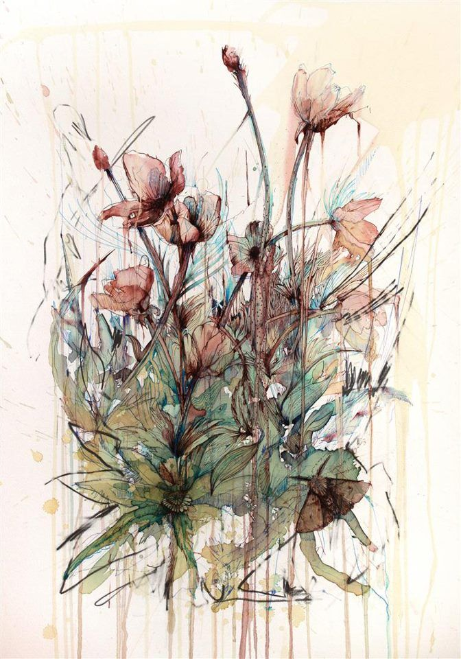 Drawn poppy pen and ink This about more images drawing