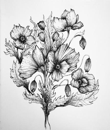 Drawn poppy hand drawn Ink 1fb50759 Skillshare Poppies Projects