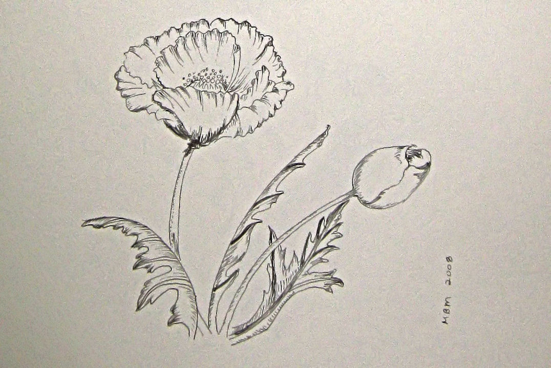 Drawn poppy pen and ink Jpg the Now Different Something