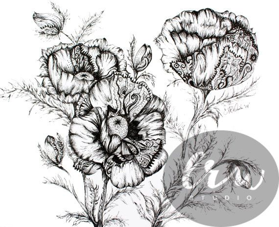 Drawn poppy pen and ink And ink Print and Pinterest