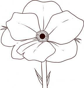 Drawn poppy pencil drawing / pages How pencil a