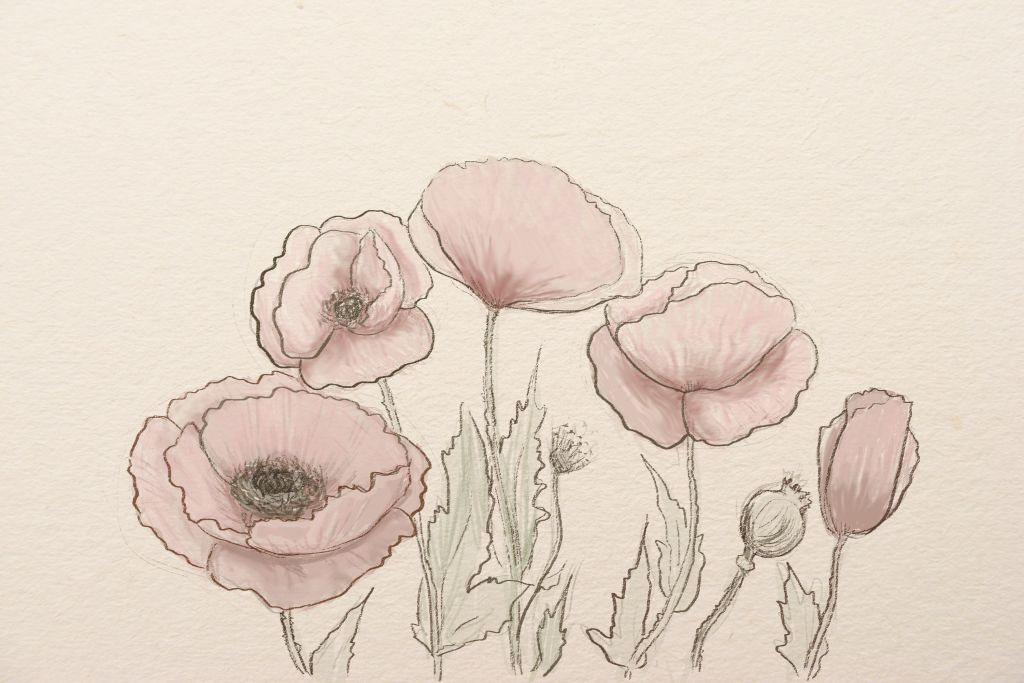 Drawn poppy pencil drawing How step The pencil art