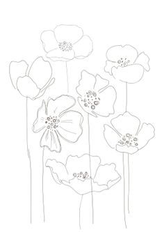 Drawn poppy pencil step by step Find more cuadros this and
