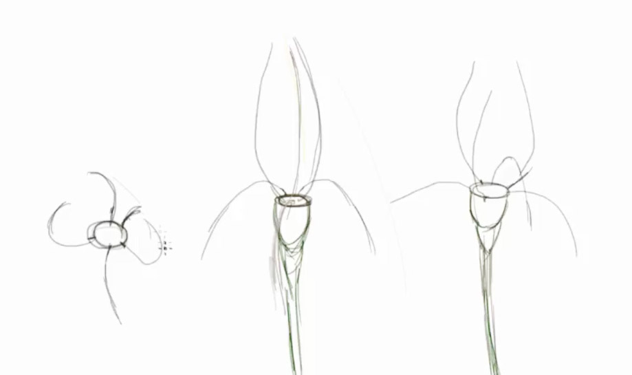 Drawn poppy pencil step by step How flower to to a