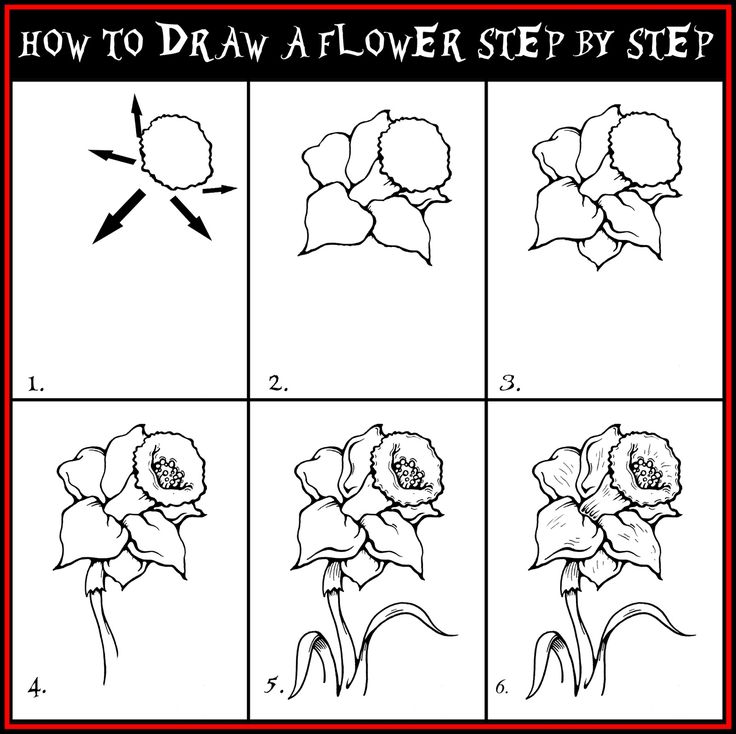 Drawn poppy pencil step by step Drawing step images flowers by