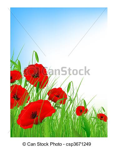 Drawn poppy poppy field Field  of Vector poppy