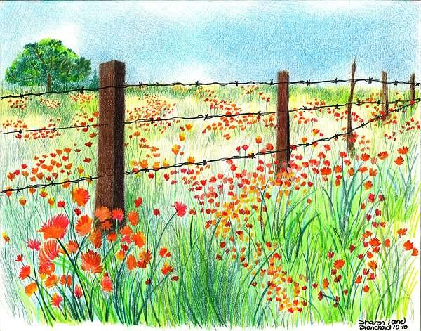 Drawn poppy poppy field Field Blanchard by Poppies Drawing