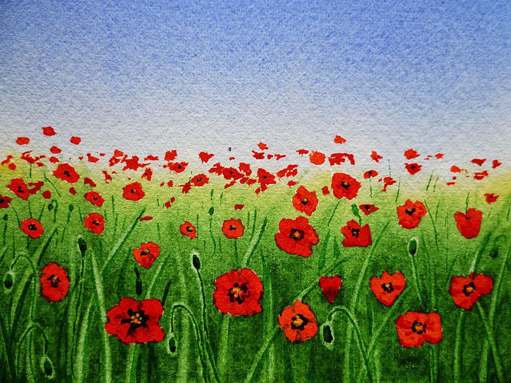 Drawn poppy poppy field Poppies Fine Field A Thousand