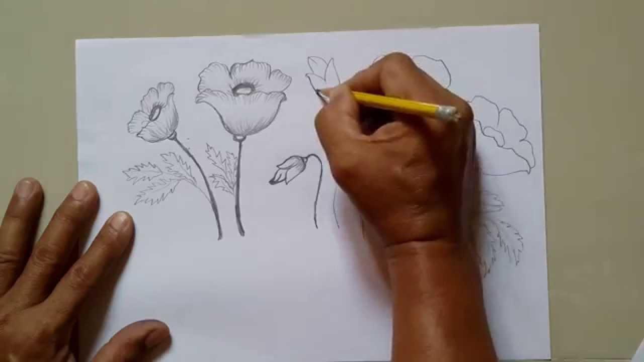 Drawn poppy poppy field Draw Flower Flower How To