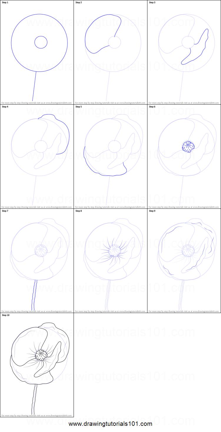 Drawn poppy poppy flower Printable Poppy step Draw sheet