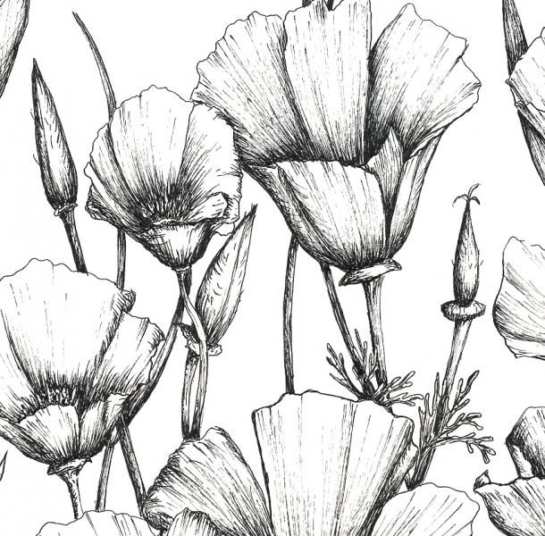 Drawn poppy poppy flower & Tattoo Artwork Drawing Artwork