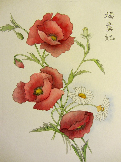 Drawn poppy poppy flower World Collection Red Getty Drawing