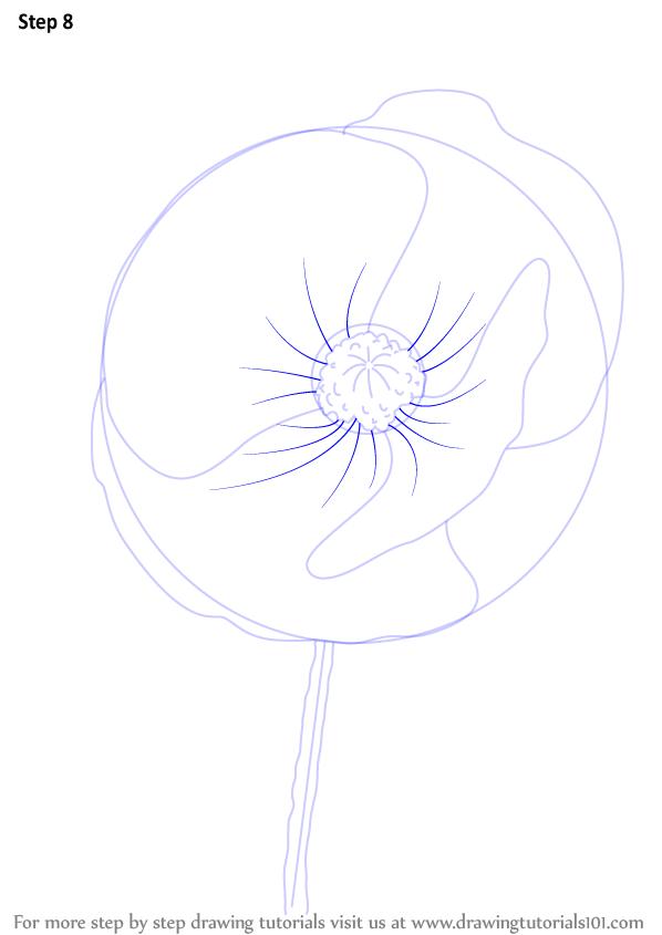 Drawn poppy poppy flower By (Poppy) Drawing Flower Learn