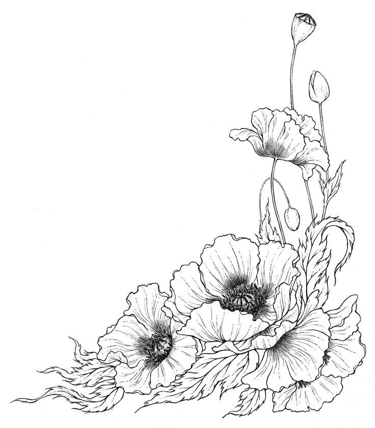 Drawn poppy poppy flower Google Поиск hepatica Pin and