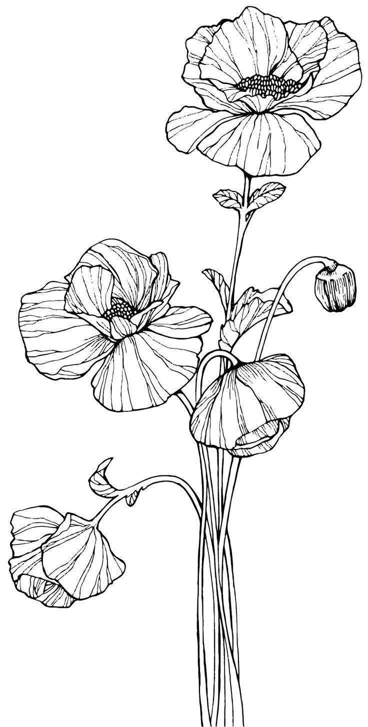 Drawn poppy poppy line  Digi fikir Pinterest'teki ile