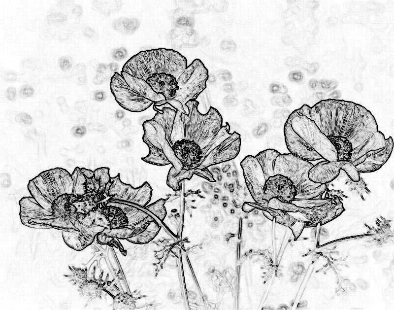 Drawn poppy poppy line Blog line Prickly » Prickly