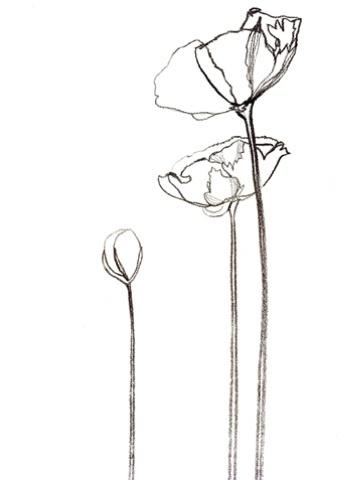 Drawn poppy poppy line Drawing result line Image line