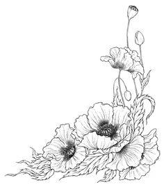 Drawn poppy poppy line Coloring Поиск Poppy : California