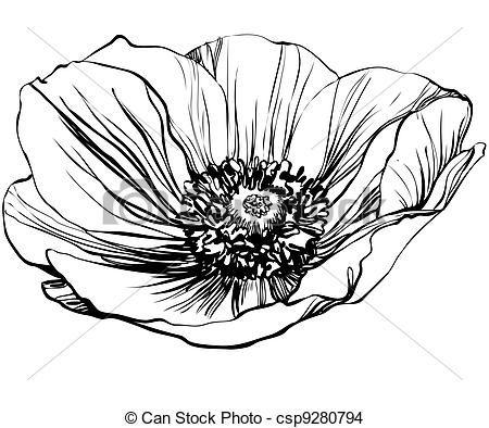 Drawn poppy poppy line Best Poppy 25+ stock Pinterest