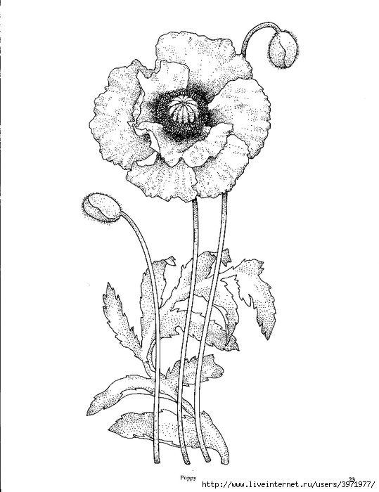 Drawn poppy poppy line The on drawing ideas best