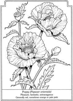 Drawn poppy poppy line Поиск this графика Done Pinterest