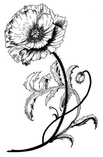 Drawn poppy poppy line On this images ideas on