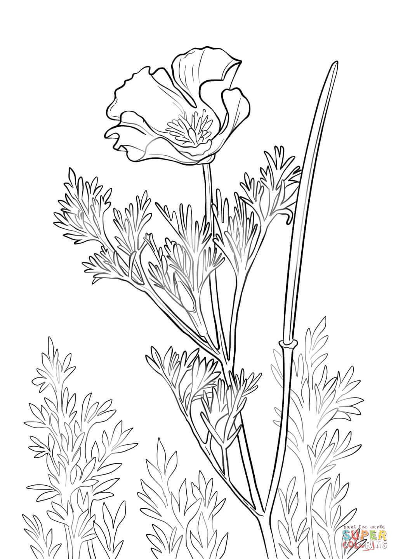 Drawn poppy poppy line The page Poppy coloring Poppy
