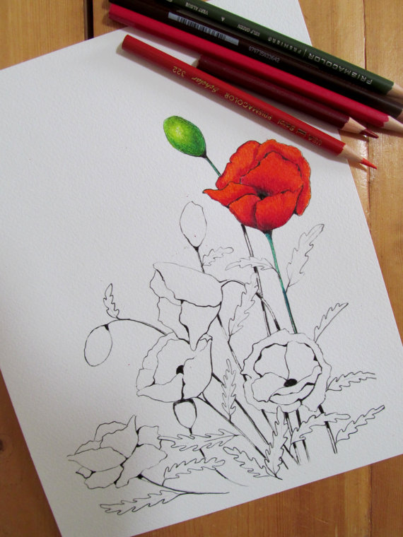 Drawn poppy printable Color Poppy to Coloring to