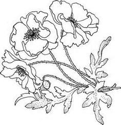 Drawn poppy printable Bing California Drawing Images Coloring