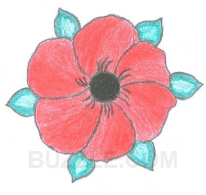 Drawn poppy real flower Meaning 25+ Best Meaning ideas